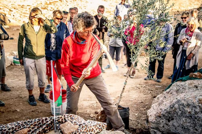 'All-Way' Walker Denise helping to plant an olive tree in Amos' honour at the Sumud Peace Camp in the South Hebron Hills.