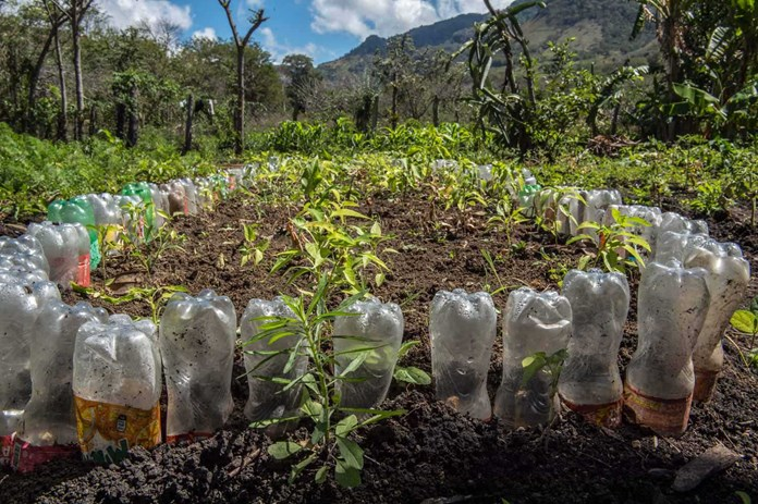 Recycled plastic bottles used as a simple irrigation system in rural Nicaragua.